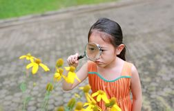 Consideravelmente pouca menina asiática da criança com olhares da lupa na flor no parque do verão fotos de stock