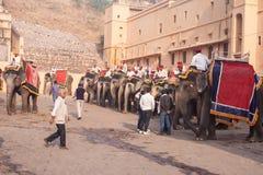 Consiguiendo los elefantes listos para caminar Foto de archivo libre de regalías