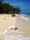 Console da tartaruga. Mar de Sulu Fotos de Stock Royalty Free