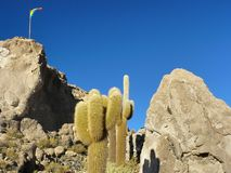 Console de Incahuasi. Salar de Uyuni. Bolívia. Fotografia de Stock Royalty Free