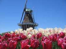 Console do moinho de vento de DeZwaan Fotografia de Stock