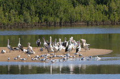 Console do Pelican fotos de stock royalty free