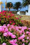 Console floral Lanzarote imagem de stock