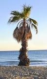 Console mediterrâneo recolhido fotografia Córsega imagem de stock royalty free