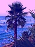 Console mediterrâneo recolhido fotografia Córsega Imagens de Stock Royalty Free