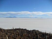 Console nos planos de sal, Bolívia do cacto Imagens de Stock