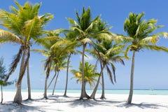 Console tropical imagem de stock