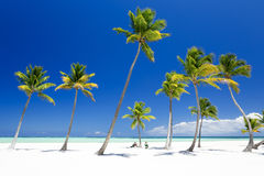 Console tropical imagem de stock royalty free