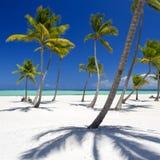 Console tropical foto de stock