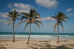 Console tropical Fotografia de Stock Royalty Free