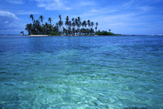 Console tropical da palma Imagem de Stock