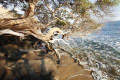 Console tropical da praia imagens de stock royalty free