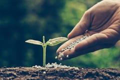 Consolidazione della pianta del bambino Immagine Stock