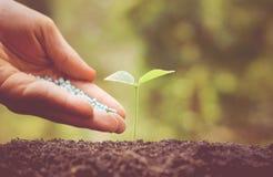 Consolidazione della pianta del bambino con fertilizzante chimico Fotografia Stock Libera da Diritti