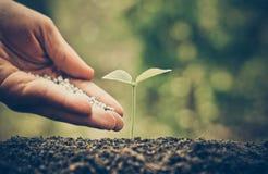 Consolidazione della pianta del bambino con fertilizzante chimico Fotografie Stock