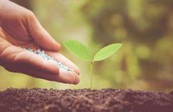 Consolidazione della pianta del bambino con fertilizzante chimico Immagine Stock Libera da Diritti