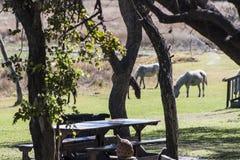 Consommation de chevaux Photographie stock libre de droits
