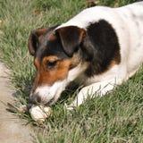 Consommation de chien Photographie stock libre de droits
