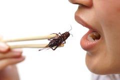 Consommation de l'insecte photographie stock