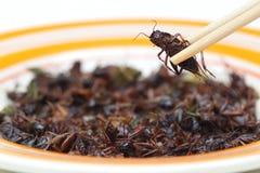 Consommation de l'insecte images stock
