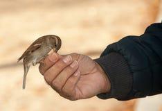 Consommation de l'oiseau i Photos libres de droits