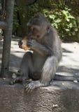 Consommation de singe Image libre de droits