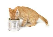 Consommation du chat Photo stock