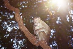 Consommation du singe Image libre de droits