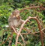 Consommation du singe Photo libre de droits