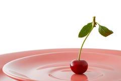 consommation du végétarien en bonne santé de ration Images stock