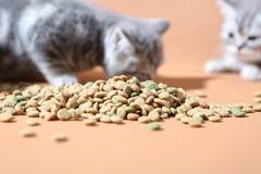 Consommation mignonne de chatons Images stock