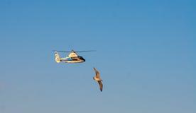 CONSTANTA RUMÄNIEN - AUGUSTI 21, 2010 fågeln flyger nästan helikoptern Royaltyfri Fotografi