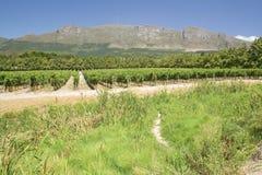 Constantia酒葡萄园在开普敦,南非外面 免版税库存图片