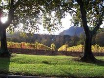 виноградник constantia autumncape Стоковая Фотография