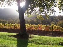 Constantia Cape Vineyard sunset royalty free stock image
