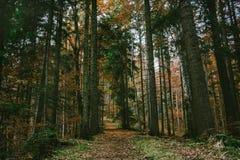 Constatant que chemin caché à la mère nature photographie stock