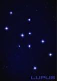 Constelação do lúpus Imagens de Stock Royalty Free