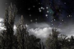 Constelación del sagitario sobre los árboles Libre Illustration