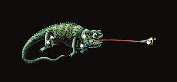 Constellation The Chameleon Royalty Free Stock Images
