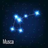 The constellation Musca star in the night sky. Stock Photo