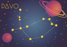 The constellation Pavo. Bright image of the constellation Pavo. Kids who are fond of astronomy will like it very much Vector Illustration