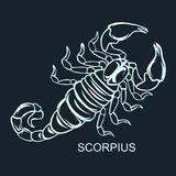 Constellation Scorpius illustration. Constellation Scorpius zodiac sign. Flat  illustration Royalty Free Stock Photo