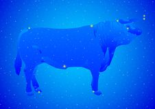 Constellation Taurus Stock Photography