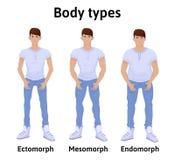 Constituição do corpo humano Tipos de corpo do homem Imagens de Stock