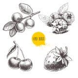 Constitution des grappes tirée par la main de style de croquis La framboise avec des feuilles, les fraises, la cerise et les myrt illustration stock