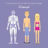 Constitution of Human Body. Ectomorph. Ectomorphic Stock Photos