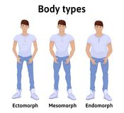 Constitution of human body. Man body types. Stock Images