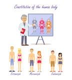 Constitution of the Human Body Types Stock Images