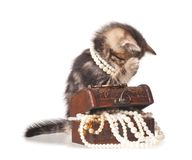 Constraining kitten Royalty Free Stock Photography