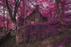 Construção abandonada arruinada velha assustador na terra surreal grossa da floresta Fotos de Stock